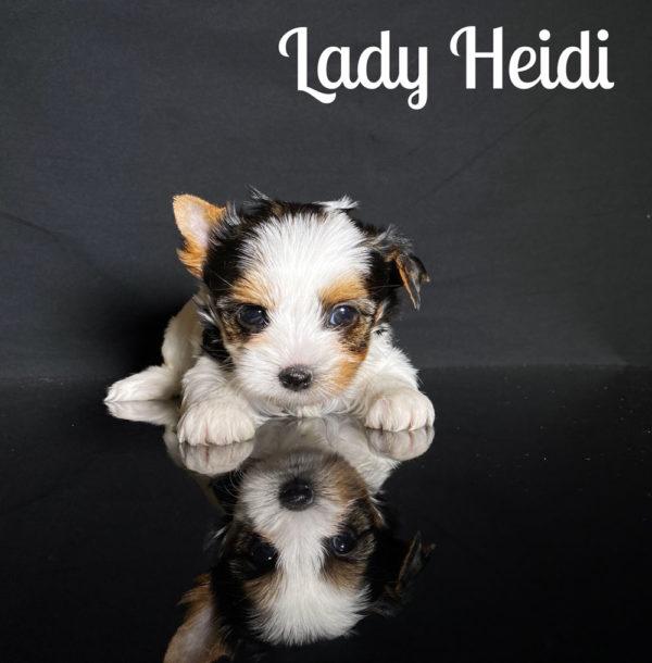 Heidi Biewer