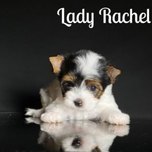 Rachel Biewer Puppy