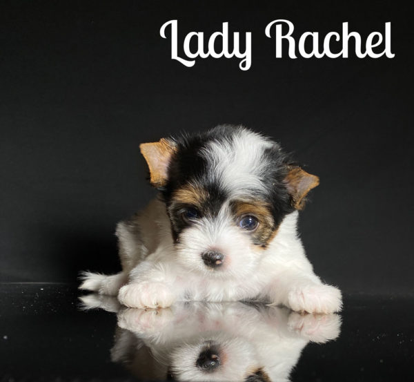 Rachel Biewer Puppy