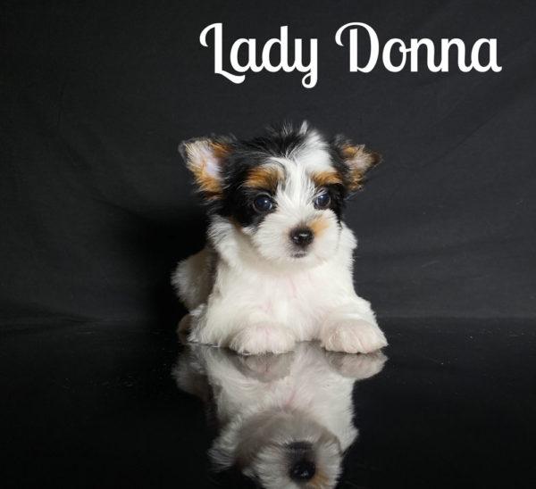 Donna 3