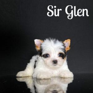 Glen Biewer Puppy