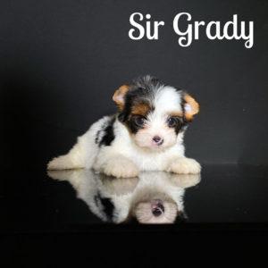 Grady Biewer Puppy