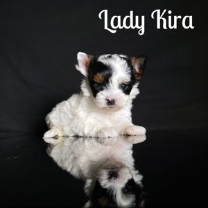 Kira Biewer Puppy