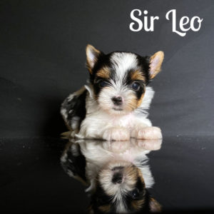 Leo Biewer Puppy