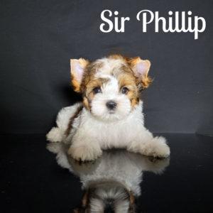 Phillip RSD Puppy