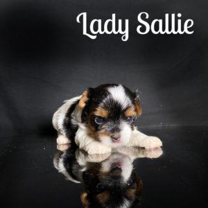 Sallie Biewer