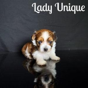 Unique RSD Puppy
