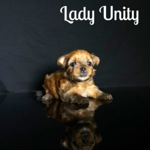 Unity RSD Puppy