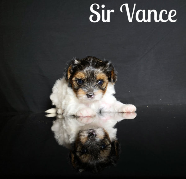 Vance Biewer Puppy