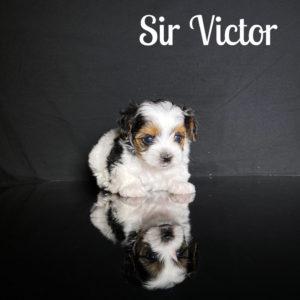 Victor Biewer Puppy