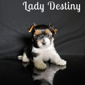 Destiny Biewer Puppy
