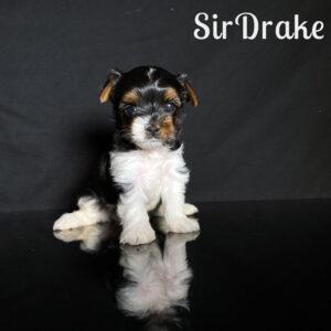 Drake Biewer