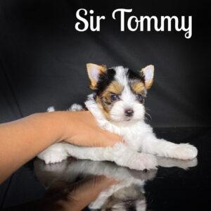 Tommy Biewer Puppy