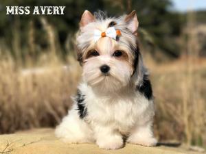 avery-1