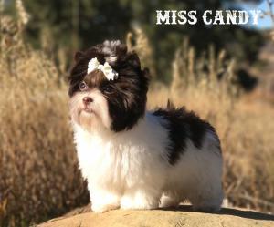 Miss Candy Biro Girl
