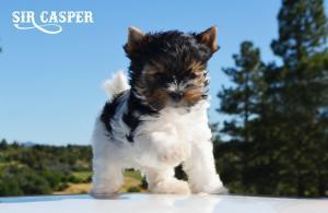 Casper-8-weeks-1