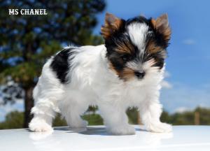 Chanel-July-1