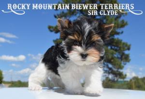 Rocky Mountain's Sir Clyde