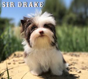 Drake-5-months-1