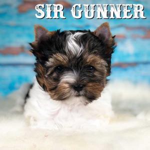 Rocky Mountain's Sir Gunner is 8 Weeks old