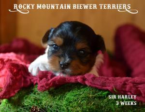 Rocky Mountain's Sir Harley