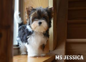 Ms Jessica Biewer Terrier Girl