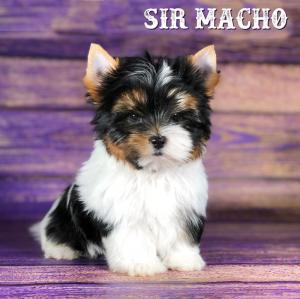 Macho-9-weeks-1