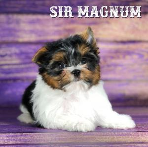 Rocky Mountain's Sir Magnum