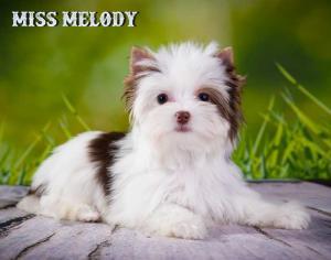 Chocolate Biro Girl Miss Melody