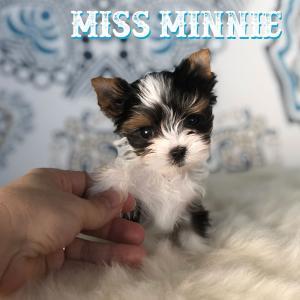 Miss Mini
