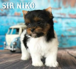 Rocky Mountain's Sir Niko