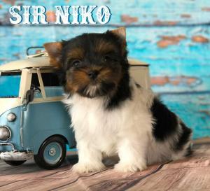 Rocky Mountain's Sir Niko