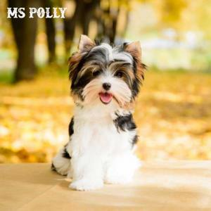 polly-1