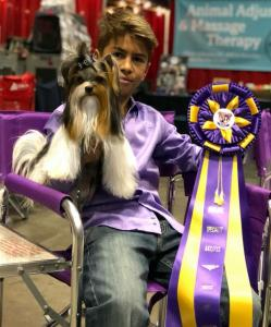 Rocky Mountain Biewer Terriers AKC CHampionship 2017 Orlando Florida-10