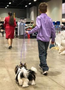 Rocky Mountain Biewer Terriers AKC CHampionship 2017 Orlando Florida-4