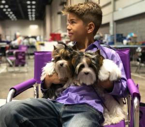 Rocky Mountain Biewer Terriers AKC CHampionship 2017 Orlando Florida-5