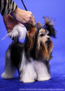Rocky Mountain's Sir Remington Multi Best in Show