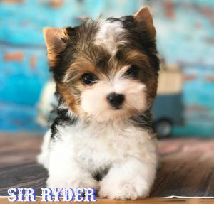 Rocky Mountain's Sir Ryder