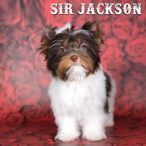 Sir-Jackson-2