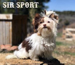 Biro Puppy Sir Sport