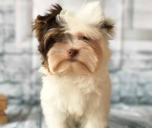 Sir Sport Biro Puppy