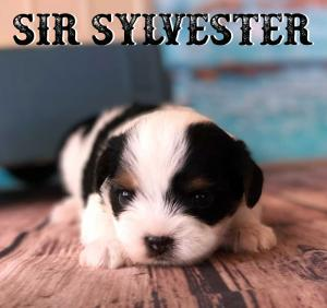 Rocky Mountain's Sir Slylvester