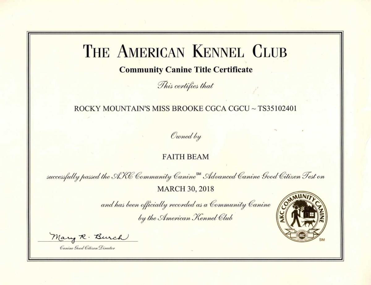 Akc Title Certificates Rocky Mountain Biewer Terriers