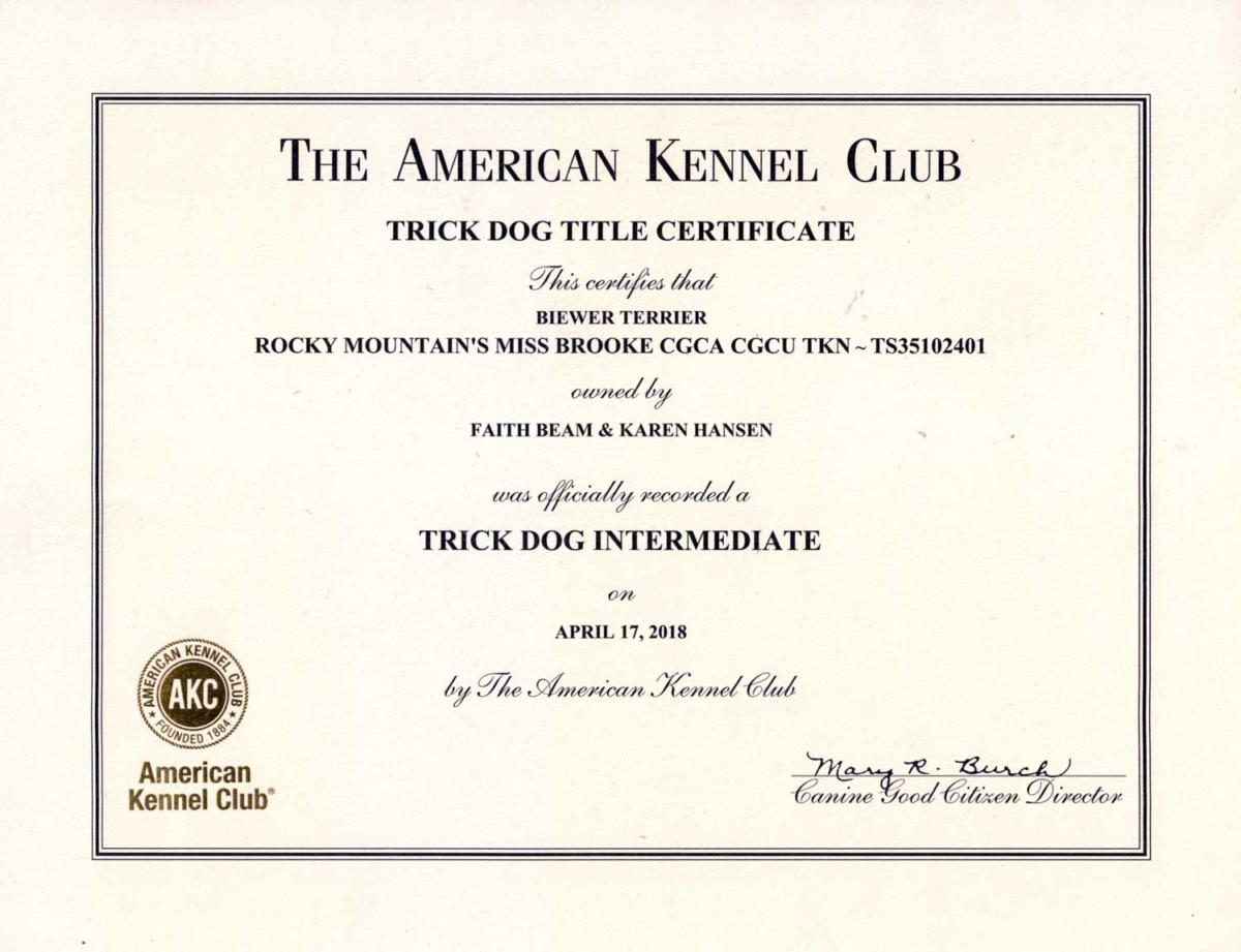 Akc Title Certificates Rocky Mountain Biewer Terriers