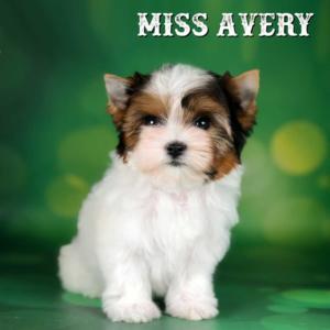 Avery-10-weeks-1