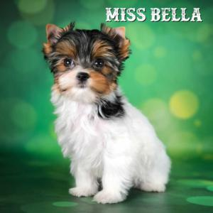 Bella-12-weeks-1