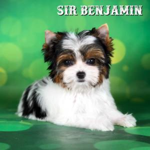 Benjamin-12-weeks