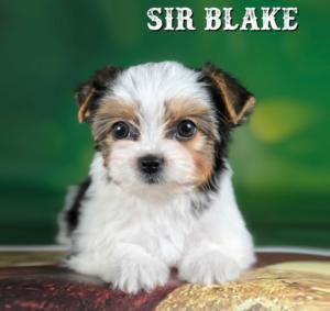 Blake-10