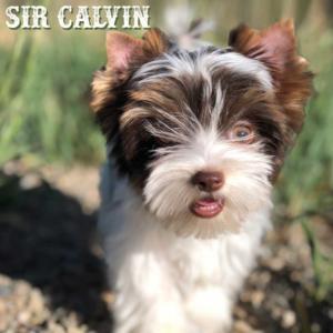 Calvin-2