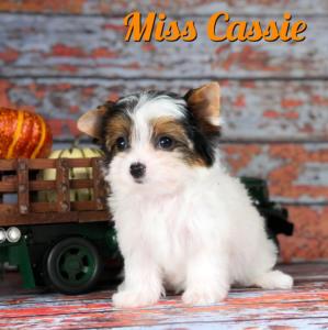 Cassie2-1